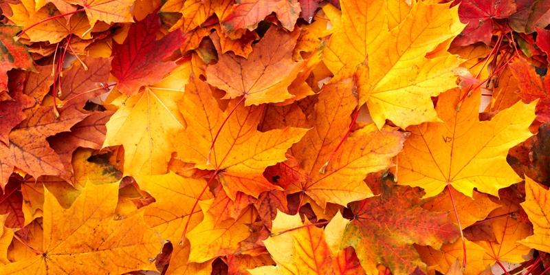 image autumn leaves new 0 jpg rwby wiki fandom powered by wikia