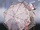 Neo's Umbrella