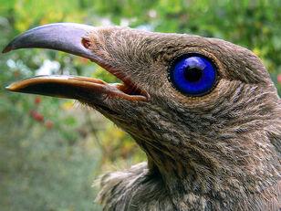 Bird-like Fauna  | RWBY Wiki | FANDOM powered by Wikia