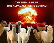 The-end-is-near-funny-end-of-the-world-pictures