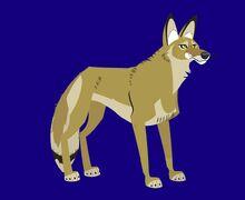 Coyote-wild-kratts