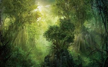 FerayoForest