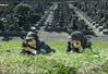Ichiko y Ritsuko 03
