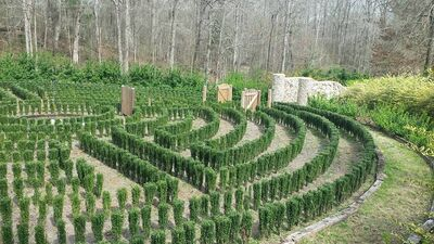 S-town-hedge-maze-2