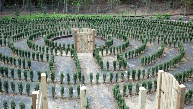 File:S-town-hedge-maze-6.jpg