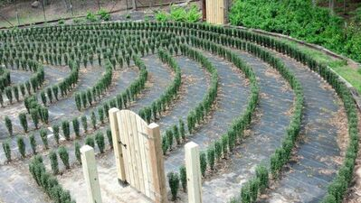S-town-hedge-maze-3