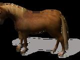 Лошадь (Sacred)