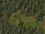 Вулфдэйл, лесная поляна