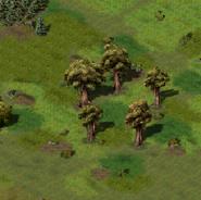Круг деревьев Ширс-Пена 5