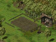 Флорентина, ферма Крома Эландера 4