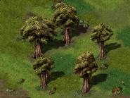 Круг деревьев Ширс-Пена 4