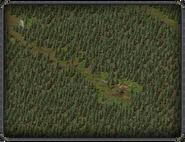 Тимбертон, лесной лагерь 3
