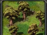 Круг деревьев Ширс-Пена