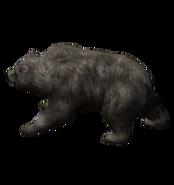 Серебряный медведь