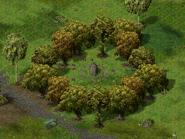 Круг деревьев Флорентины 4