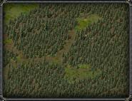 Тимбертон, восточная поляна 3