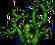 Thornroot Weed (100)