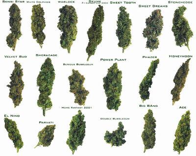 QRzkSmYfQWG5n0f1AsUc weed