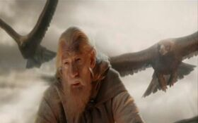 Gandalf eagles