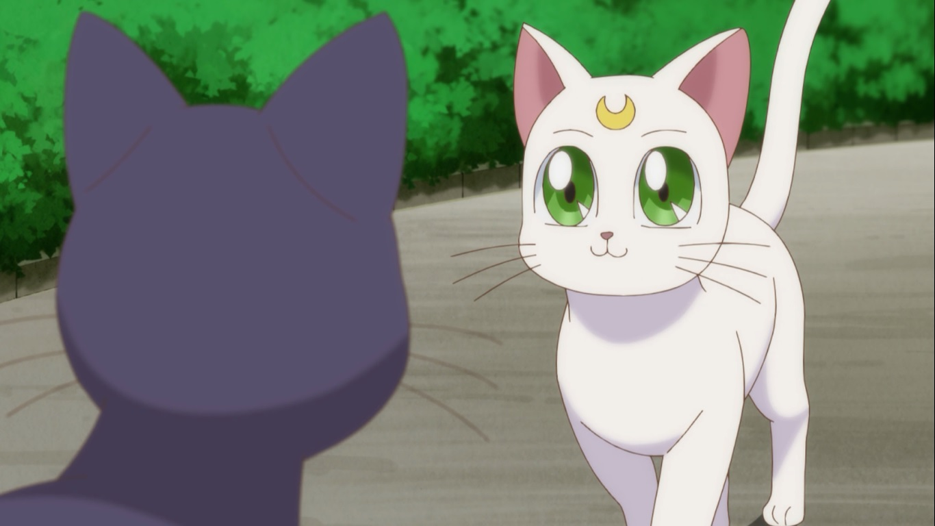 Artemis Wiki Sailor Moon FANDOM