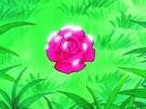 Różane Kolczyki