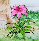 Glycinakwiat