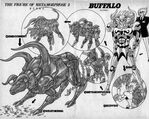 Shelter-buffalo