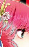 Rosa Athena Champion Red