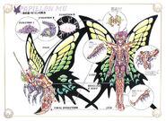 Papillón Surplice esquema