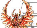Cloth de Phoenix