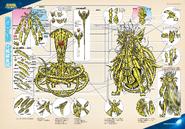Schéma de l'Armure d'Or d'Ophiuchus