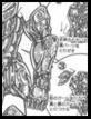 Brazo Aries Manga