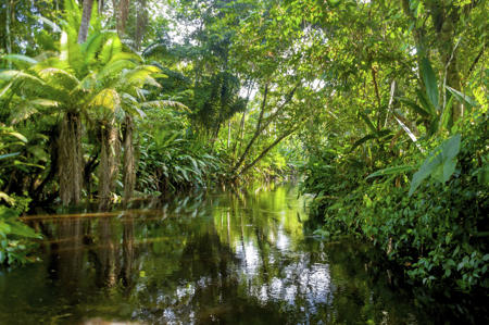 File:450-480311415-amazon-jungle.jpg