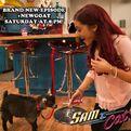 Cat and a goat - NewGoat promo pic