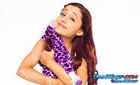 Cat holding a toy giraffe