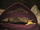 Prolatomebia volubilis