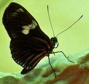 CAS-BioD-Understory-Butterfly