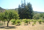Fruit ranch