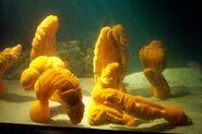 CAS-Aquarium-Giant Sea Pen