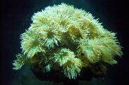 CAS-Aquarium-Whiskers Coral