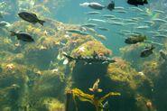 CAS-Aquarium1