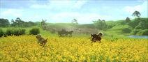 Shire farmers