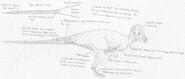 Pachycephalosaurus update