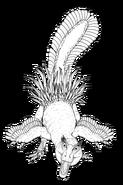 Pectinodon