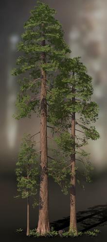 Jake+Sequoia+1