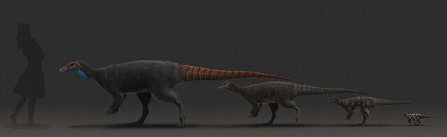 File:Thescelosaurus-ontogeny-all-1.jpg