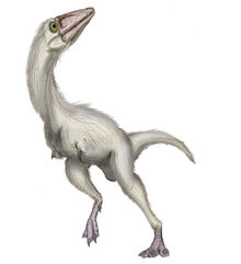 Parvicursor-remotus by maniraptora
