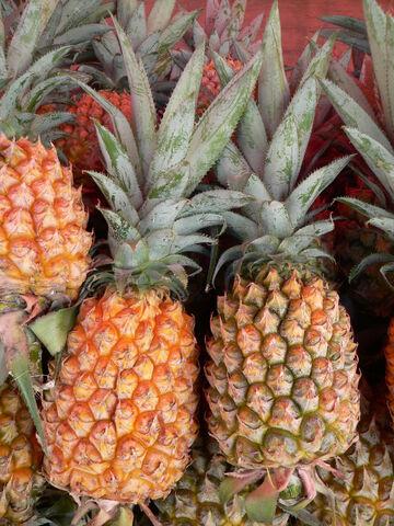 Ananas comosus Victoria P1190421
