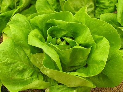 3.bouquet.de.salade.laitue
