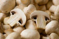 Cogumelos-champignon-cursos-cpt